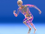 Running Skeleton In Body, Artwork Photographic Print by Roger Harris