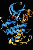 CDK2 Enzyme Structure Photo by Lawrence Berkeley National Laboratory