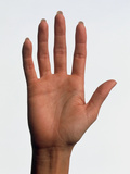 Hand of a Woman Seen Palm-up with Fingers Straight Photographic Print by Phil Jude