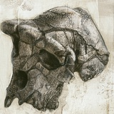 Sahelanthropus Tchadensis Skull Photographic Print by Kennis and Kennis