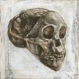 Taung Child Skull Photographic Print by Kennis and Kennis