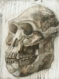 Australopithecus Afarensis Skull Print by Kennis and Kennis