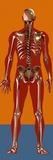 Skeleton, Artwork Posters by Mehau Kulyk