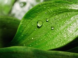 Leaf And Water Droplets Photographic Print by Richard Kail