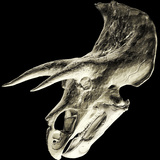 Triceratops Dinosaur Skull Photographic Print by Smithsonian Institute