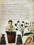 Herbal Medicine, 10th Century Print by Science Photo Library