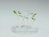Plant Biotechnology Photographic Print by Lawrence Lawry