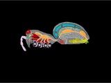Arachnid Anatomy, Artwork Photographic Print by Francis Leroy