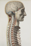 Brain And Spinal Cord, 1844 Artwork Prints by Science Photo Library