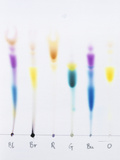 Paper Chromatography Photographic Print by Andrew Lambert