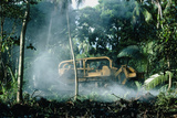 Bulldozing a Rainforest, Hawaii Print by Brad Lewis