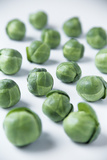 Brussels Sprouts Photographic Print by Veronique Leplat