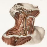 Neck Vascular Anatomy, Historical Artwork Premium Photographic Print by Science Photo Library