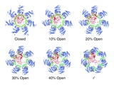 Protein Folding Mechanism Posters by Lawrence Berkeley National Laboratory