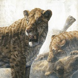 Homotherium Scimitar Cats Photographic Print by Kennis and Kennis