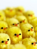 Toy Chicks Poster by Tek Image
