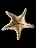Starfish Photographic Print by Gavin Kingcome