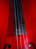 Cello Strings Photographic Print by Andrew Lambert