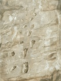 Laetoli Fossil Footprints Fotografisk tryk af Kennis and Kennis