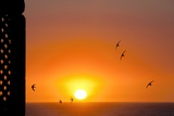 Swallows Flying At Sunset Photographic Print by Laurent Laveder