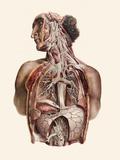 Cranial Nerves Photographic Print by Mehau Kulyk
