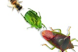 Insects Photographic Print by Sigrid Gombert