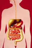 Illustration of Alimentary Canal Components Posters by David Gifford