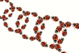 Ladybirds Photographic Print by Sigrid Gombert