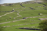 Agricultural Landscape, Yorkshire Dales Photographic Print by Bob Gibbons