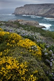 Spring Wildflowers, Portugal Prints by Bob Gibbons