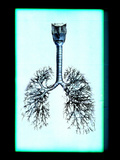 Human Lungs Photographic Print by Neal Grundy