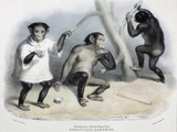 1835 Tommy First Chimpanzee In London Zoo Poster by Paul Stewart