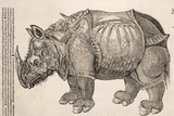 1551 Gesner Armoured Rhino After Durer Photographic Print by Paul Stewart