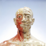 Acupuncture Model Photographic Print by Steve Taylor