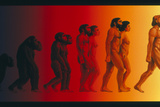 Artwork of the Stages In Human Evolution Photographic Print by David Gifford