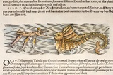 1554 Gesner Shark Attack on Man with Ray Posters by Paul Stewart