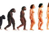 Stages In Female Human Evolution Photographic Print by David Gifford