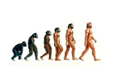 Stages In Human Evolution Photographic Print by David Gifford