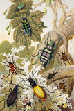 Beetles Photographic Print by Sheila Terry
