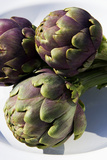 Globe Artichokes Prints by Sheila Terry