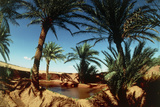 Oasis on the Road South of Adrar, Algeria Photographic Print by Sinclair Stammers