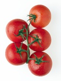 Cherry Tomatoes Photographic Print by Mark Sykes