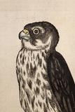 1560 Gesner Merlin Falcon Bird of Prey Photographic Print by Paul Stewart