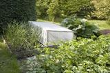 Protective Cover In a Vegetable Garden Reprodukcja zdjęcia autor Sheila Terry