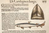 1560 Gesner First Fossil Illustration Prints by Paul Stewart