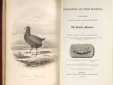 1851 Takahe Mantell's Petrifactions Book Print by Paul Stewart