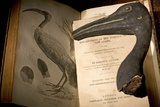 Mummified Ibis & Cuviers Evolution Affiches par Paul Stewart