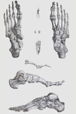 Foot Bones Photographic Print by Sheila Terry