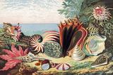 Sea Shells Fotografisk tryk af Sheila Terry