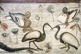 Nile Flora And Fauna, Roman Mosaic Papier Photo par Sheila Terry
